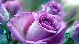 Пазлы цветы собирать бесплатно
