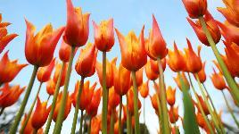 Бесплатные пазлы собирать цветы